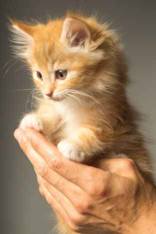 animal cute kitten cat