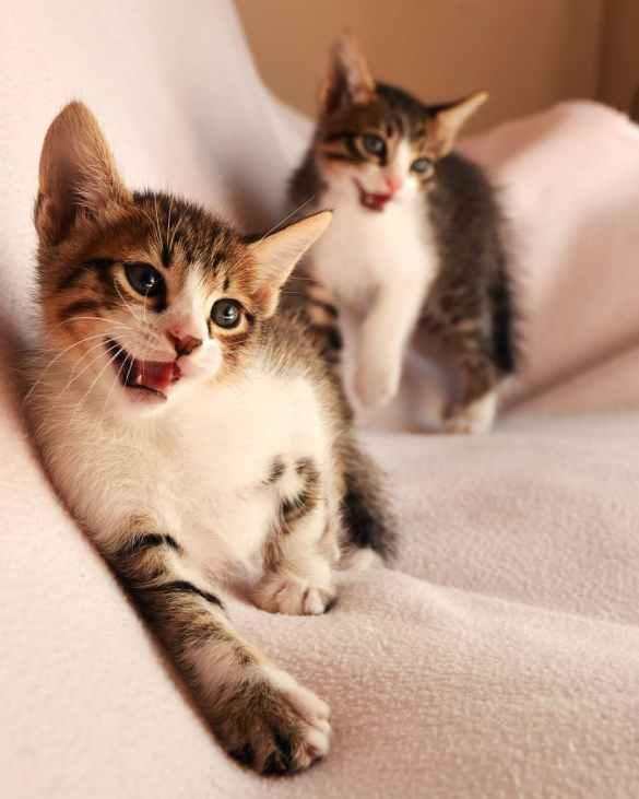 animals cat face cat s eyes cats