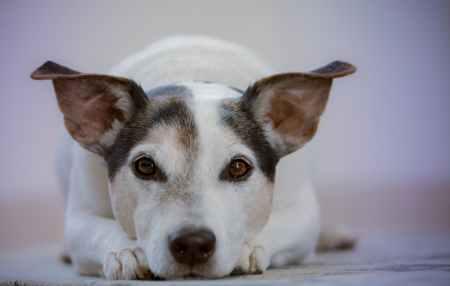 adorable animal animal photography canine
