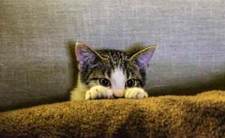 eyes cat coach sofa